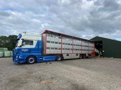 Special animal transport